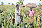 Christine Fatina, a United Methodist, harvests pineapples with her daughter on their farm in Pisak, Southern Sudan...