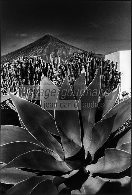 Europe/Espagne/Canaries/Lanzarote/Env de Teguise/Taro de Tahiche : Paysage volcanique depuis le jardin de la fondation César Manrique