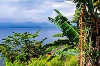 Indonesia, Sumatra. Samosir. Banana tree at Lake Toba. Tuk Tuk looking east.