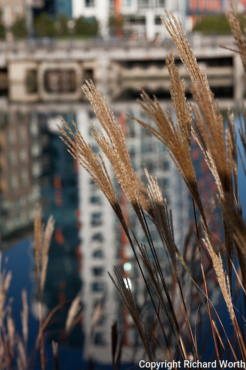 Grass detail, with a Mission Creek reflection as background.
