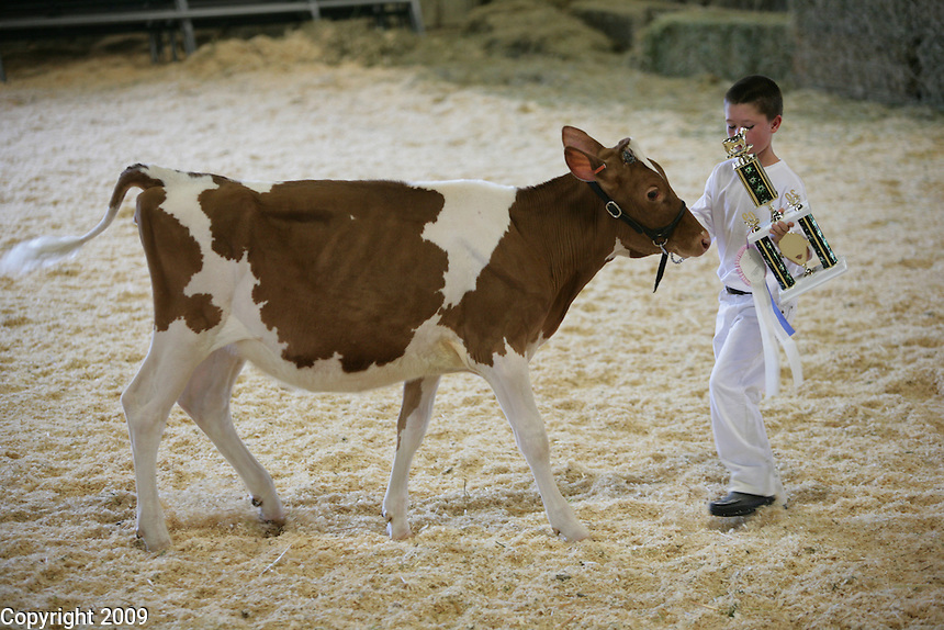 Alex Kayser-Novice Fitting and Showing of Jersey calves. .NW Washington Fair. August 18, 2009 PHOTOS BY MERYL SCHENKER