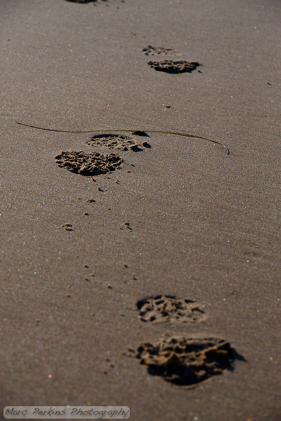 My own footprints at Crystal Cove State Park beach.  I'd been on the beach for more than an hour when I turned around to go back up the stairs, and realized that my footprints were the only ones in the sand.  Awesome.