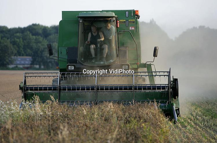 Foto: VidiPhoto..RANDWIJK - Bij biologische akkerbouwer André Jurrius uit Randwijk wordt maandagavond lupine geoogst. Lupine is een biologische vleesvervanger die lijkt op soja, met dezelfde voedingswaarde en eigenschappen, en is voor Nederland een nieuw gewas. Het moet in de toekomst de buitenlandse soja gaan vervangen. In totaal is er in ons land maar een lupine-areaal van 15 hectare, waarvan Jurrius 12 hectare voor zijn rekening neemt in opdracht van een andere biologische akkerbouwer.