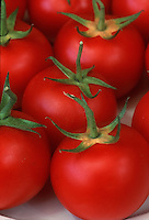 Tomatoes Durinta fresh picked vegetables with stems, red ripe