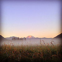 Morning alpenglow illuminates Mt. Rainier as seen from a misty field in Enumclaw, Washington.