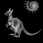 X-ray image of a kangaroo (white on black) by Jim Wehtje, specialist in x-ray art and design images.