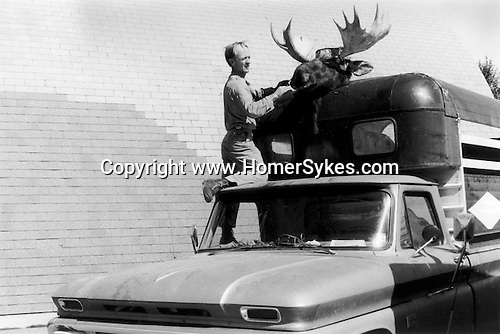 EVANSTON WYOMING - USA 1971. A MAN TIES A MOUSE HEAD TO THE TOP OF A HORSEBOX. THE MOUNTED HEAD LOOKS AS IF IT IS ATTACHED TO THE HORSE THAT IS VISIBLE IN THE HORSE BOX