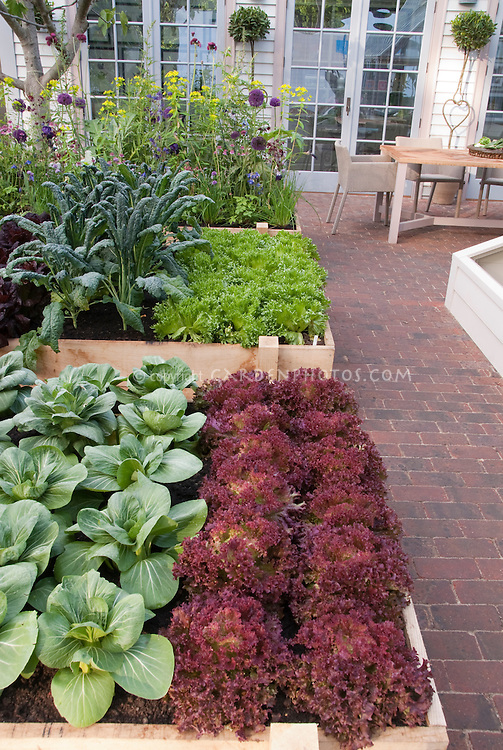 Raised Bed Gardens Stock Photos - Images | Plant & Flower Stock ...