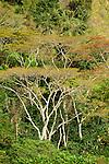 Forest detail near Wae Rebo, Flores.