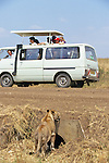 People Watching Lioness Near Culvert