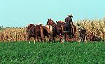 Amish farmer cuts corn field Commonwealth of Pennsylvania, Keystone state, Thirteen Colonies, Constitution Fine Art Photography by Ron Bennett, Fine Art, Fine Art photography, Art Photography, Copyright RonBennettPhotography.com © Fine Art Photography by Ron Bennett, Fine Art, Fine Art photography, Art Photography, Copyright RonBennettPhotography.com ©