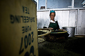 Factory workers are seen sorting out the tea leaves at Makaibari Tea Estate factory, Kurseong in Darjeeling, India.
