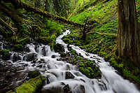 Wahkeena Creek flows through lush green forests in the Columbia River Gorge.