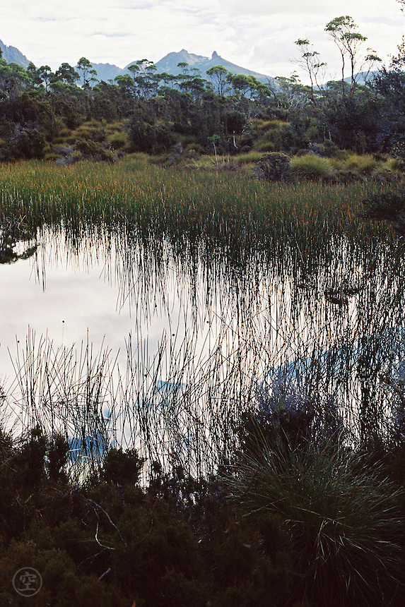 A marshy lake with eucalypts framing the view of Cradle Mountain from Tasmania's Overland Track.