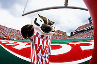 Bucky Badger cheers from the endzone during a football game at Camp Randall Stadium. <br /> <br /> Client: University of Wisconsin-Madison<br /> &copy; UW-Madison University Communications 608-262-0067<br /> Photo by: Michael Forster Rothbart<br /> Date:  2001     File#:   color slide