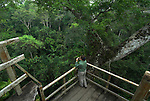 Viewing Platform High in Ceiba Tree, Ceiba pentandra, Jungle Canopy, Primary Rainforest, Manu Wildlife Centre, Peru, Amazonian, green, birdwatching, tourist, young woman. .South America....