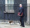 Cabinet Meeting <br /> 10 Downing Street London, Great Britain <br /> 29th March 2017 <br /> <br /> departures following the final cabinet meeting before Article 50 is triggered in Parliament today.<br /> <br /> <br /> Liam Fox follows Larry the cat out of Downing Street <br /> <br /> Photograph by Elliott Franks <br /> Image licensed to Elliott Franks Photography Services