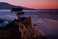 Fine art landscape image of the Lone Cypress along 17 Mile Drive in Monterey, California, after sunset, with a rosy hue along the horizon, reflecting onto the Pacific ocean as a creamy mauve color, with fading sunset light touching the western side of the rock wall surrounding the cypress.