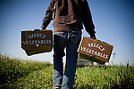 Eduardo Valenzuela carries boxes of fresh arugula at Dell Rio Botanical in West Sacramento, CA May 3, 2010.