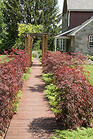 Japanese maple trees and dwarf evergreens lining pathway to front door of house, with trellis, stone home, lawn, wooden walk
