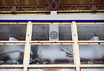 The clock on the wall has stopped at the time when the tsunami hit the sports center where Hideharu Sasaki was almost drowned following the March 11 tsunami in Rikuzebtakata, Iwate Prefecture, Japan on 09 March 2012. Around 100 people died in the sports center, while 4 people, survived. Photographer: Robert Gilhooly