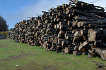 Stack of timber, that has been charred, burned and cut after forest fire in El Hierro, Canary Islands.