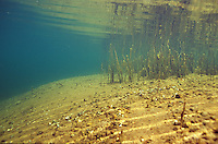 Underwater Scene-Lake Bottom<br /> <br /> ENGBRETSON UNDERWATER PHOTO
