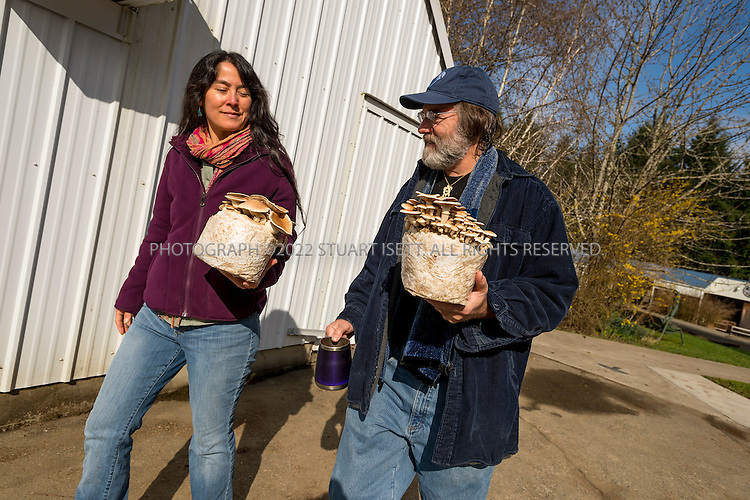 3/22/2013--Shelton, WA, USA..Paul Stamets, 57, is an American mycologist, author, and advocate of bioremediation and medicinal mushrooms and owner of Fungi Perfecti, a family run business that specializes in making gourmet and medicinal mushrooms. ..Here he walks with his wife Dusty Yao as they carry pioppino mushrooms to the production area of their farm...©2013 Stuart Isett. All rights reserved.