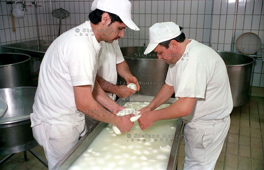 The Vannulo cheese factory in Campania...Tenuta Vannulo..Azienda   Agricola Biologica Antonio Palmieri..Caseificio Vannulo..Making Cheese..http://www.vannulo.it/production.html........