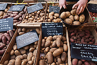 Europe/France/Nord-Pas-de-Calais/59/Nord/Dunkerque: Sur le marché étal de différentes espèces de pommes de terre // France, Nord, Dunkirk, In the market stalls of different species of potatoes