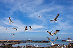 Seagulls flying over water against cloudy blue sky in Essaouira, Morocco.