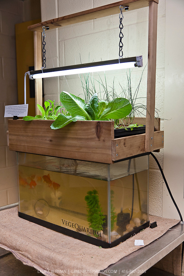 Vegequarium aquaponics system greenfuse photos garden for Fish and plants in aquaponics