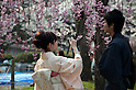 April 10, 2012, Kyoto, Japan - ATwo young men wearing traditional Japanese clothes and take pictures of the cherry blossom. Hanami is one of the oldest traditions in Japan, which is to admire the cherry blossoms. Last year this tradition was interrupted in the northeast of Japan, because of the big earthquake and tsunami of March 11, 2011.