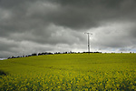 Electric wooden power poles in field of oilseed rape against grey moody sky. Aschaffenburg area, Germany