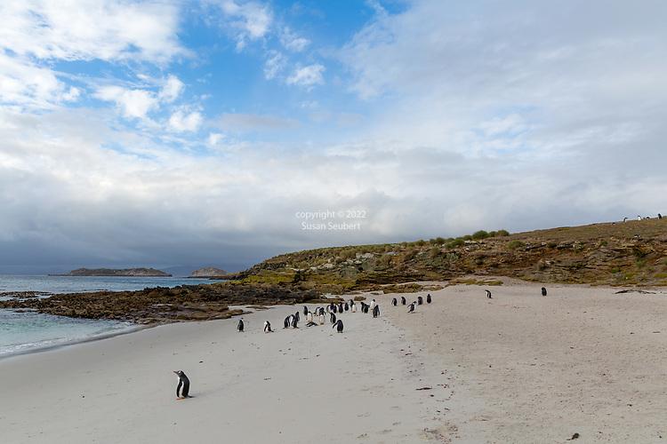 Carcass Island, Falkland Islands