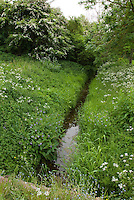 Wildflowers in meadow with stream for attracting wildlife