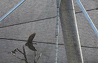 Cigogne d'Abdim (Ciconia abdimil) en vol et Calao trompette (Bycanistes bucinator) sur une branche d'arbre, nouvelle Grande Voliere, zone Sahel-Soudan, new Parc Zoologique de Paris, or Zoo de Vincennes, (Zoological Gardens of Paris, also known as Vincennes Zoo), Museum National d'Histoire Naturelle (National Museum of Natural History), 12th arrondissement, Paris, France. Picture by Manuel Cohen