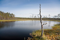 Viru Bog, Lääne-Viru County, Estonia, Europe