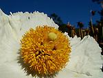 Flower at Esalen in Big Sur