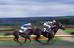 Horse race with two riders/horses racing to the finish line, slow shutter speed, motion, blurred horses, Longacres, Washington State, USA