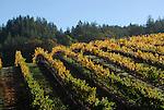 Vineyard in Sonoma County