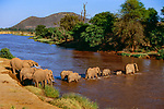 African elephant herd crossing Ewaso Ng'iro River, Samburu National Park, Kenya