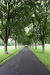 Path in park with green trees