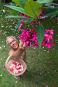 A local man picks pink plumeria flowers in a yard on O'ahu.
