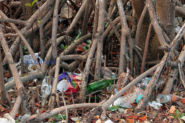 Trash washed into Red Mangrove aerial roots from boaters, Key Largo, Florida, USA