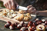 Seife aus Kastanien, Kastanienseife, Kastanien-Seife, Kind, Junge macht aus den Früchten der Rosskastanie Seife, die geschälten Kastanien werden zerkleinert, die Saponine der Früchte dienen als Waschsubstanz, Gewöhnliche Rosskastanie, Roßkastanie, Reife Früchte, Ross-Kastanie, Roß-Kastanie, Kastanie, Aesculus hippocastanum, Horse Chestnut, Marronnier d`Inde
