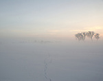 Winter Fog in the Elbe Valley a nature protection area. In the snow tracks of a walker.