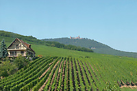 Haut Koenigsbourg