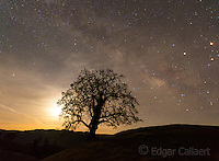 Milky Way, Coastal Live Oak, Los Padres National Forest, Big Sur, Monterey County, California