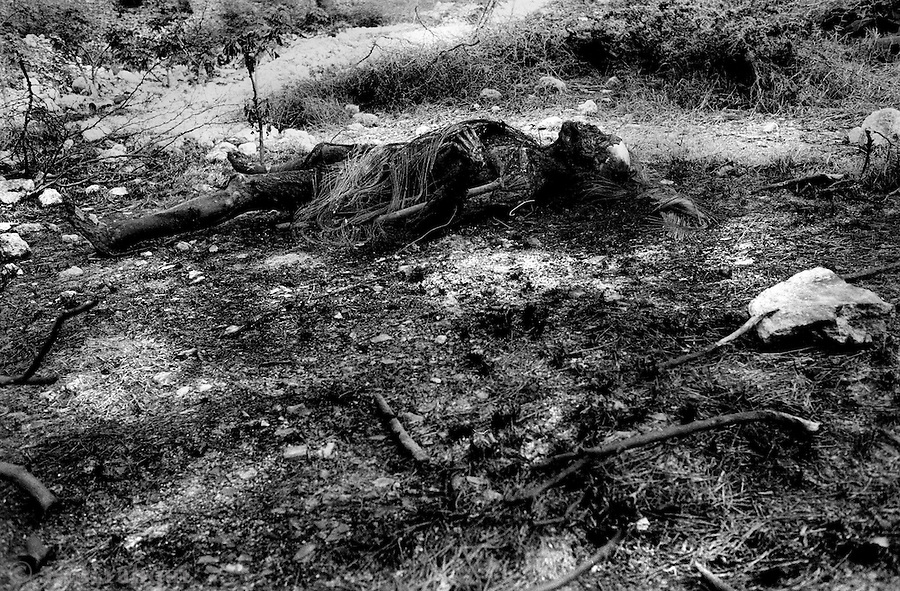 the burnt body of a man possibly executed by the haitian police lies in a field a few miles outside port au prince near the town of titanyen.  residents of titanyen claim that bodies are dumped every few days in the marshes near their town.<br />
